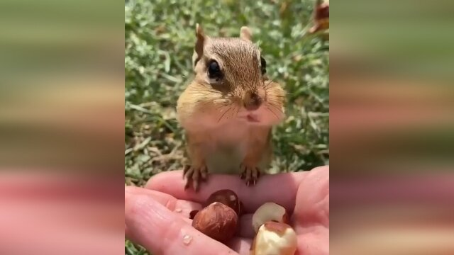 فیلمی دیدنی از لحظه فندق خوردن یک سنجاب
