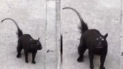 جانور عجیب الخلقه سه چشم در خیابان / فیلم