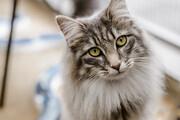 ورود گربه بازیگوش به زمین فوتبال / فیلم