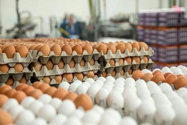 کاهش ۱۰ هزار تومانی قیمت تخم مرغ در مرغداریها