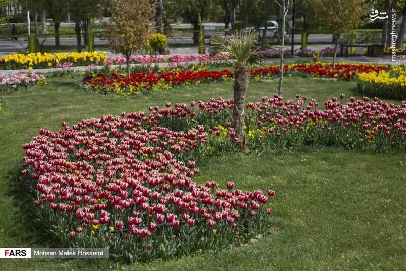 گزارش تصویری از جشنواره گلهای لاله در اراک