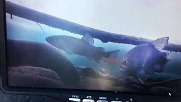 خلاقیت جالب ماهیگیر برای صید ماهی / فیلم