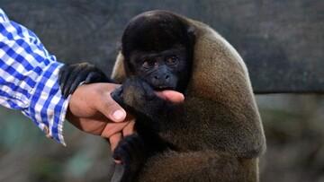 قطع انگشت دست کودک ۵ساله هنگام غذا دادن به حیوانات در باغ وحش!