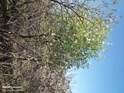 هوای اصفهان برای ششمین روز پیاپی سالم است
