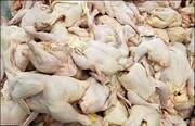 کشف بیش از ۲ تن مرغ احتکار شده از کشتارگاهی در گیلان