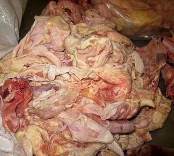افزایش مصرف آلایشهای مرغ تایید شد/ پوست مرغ هم خریدار دارد؟