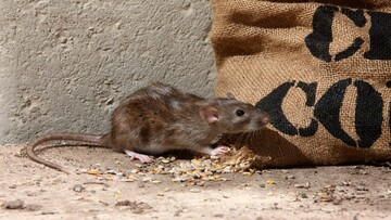 حمله موشها به انبارهای غله در استرالیا / فیلم