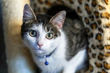 مراسم تقدیر از گربه ژاپنی باهوش / فیلم