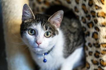 نجات گربه بازیگوش از روی کابل برق توسط ماموران آتش نشانی / فیلم