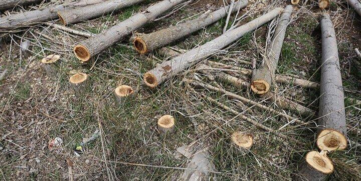 ماجرای قطع ۲۳۰۰ اصله درخت باغدار سنندجی به کجا رسید؟