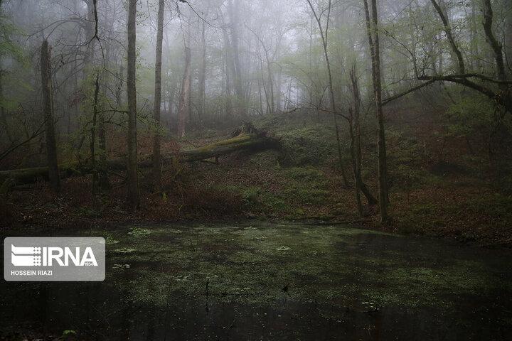 تصاویر دیدنی از جنگل و دریاچه ارواح مازندران