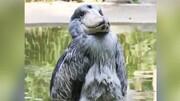 ویدئویی جالب از زشتترین پرنده دنیا