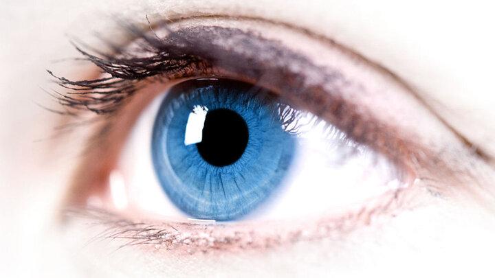 افزایش قدرت بینایی با مصرف این خوراکیها   مواد غذایی مفید برای تقویت چشم