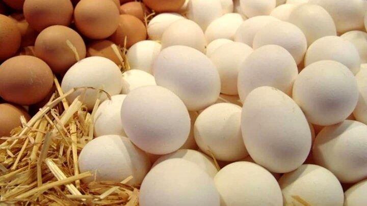 تخممرغ ارزان شد/ هر شانه ۳۰ عددی ۳۵۰۰ تومان کاهش یافت