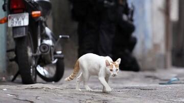 دستگیری گربه حامل موادمخدر به زندان / فیلم