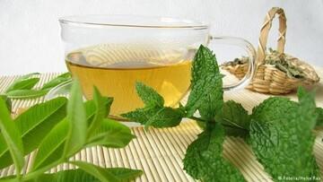 نعناع، بهترین گیاه دارویی برای روزه داران