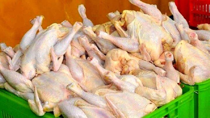 ماجرای وجود مارمولک مرده در شکم مرغ کشتار روز چه بود؟