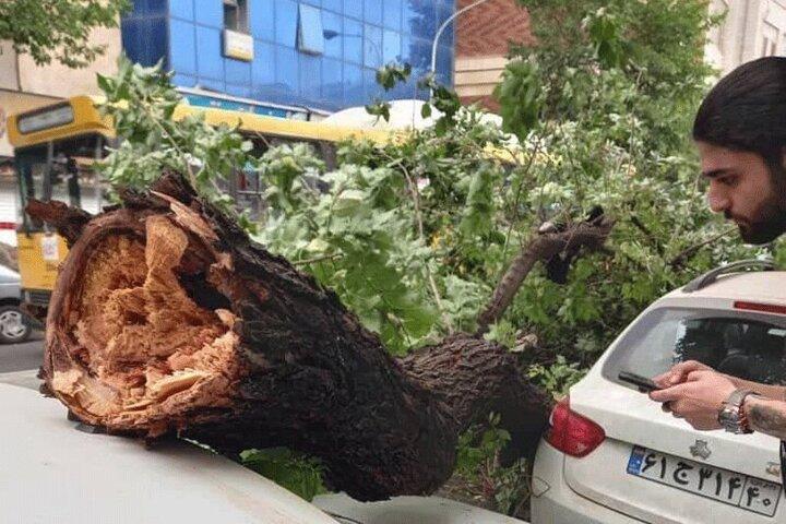 سقوط درخت بر روی ماشین بر اثر وزش شدید باد در تهران / عکس