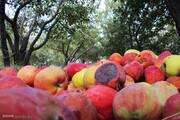 میوههای شب عید بیمشتری ماندهاند و در حال فاسد شدن هستند!