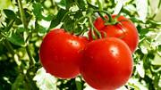 کاهش فشار خون با این خوراکیها