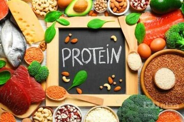 تامین پروتئین بدن با مصرف این خوراکیها