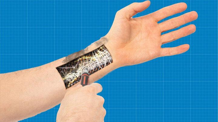 محققان: کلم سرعت ترمیم پوست را افزایش میدهد