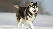 سگی که جان یک زن را نجات داد / فیلم