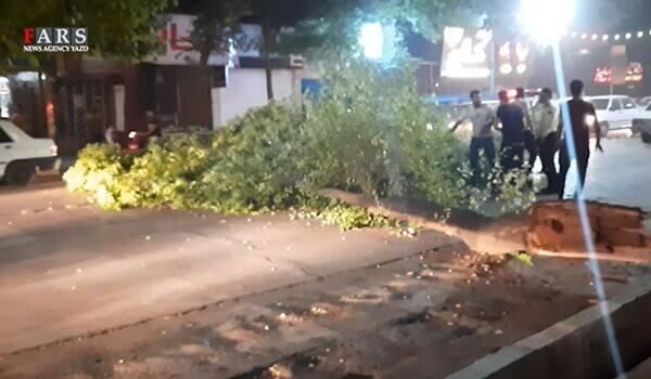 شکست درختان و  خسارت به خودروها در یزد به دلیل طوفان / فیلم