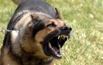 حمله مرگبار سگهای وحشی به یک مرد ۳۹ ساله در شاهین شهر