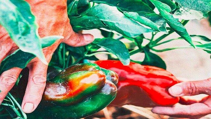 مرطوبسازی و مراقبت از پوست با مصرف این خوراکیها