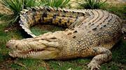 اشک تمساح چیست؟ | حقایق جالب درباره تمساح ها  که با شنیدن آن شگفتزده میشوید