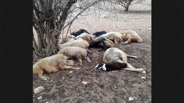 تلف شدن ۱۷ راس گوسفند بر اثر صاعقه