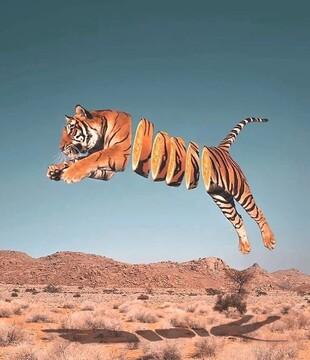عکسهای ترکیبی از حیوانات و خوراکیها