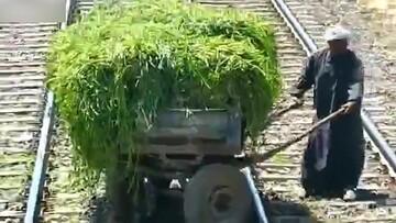 توقف قطار مسافربری برای عبور گاری کشاورز از روی ریل / فیلم