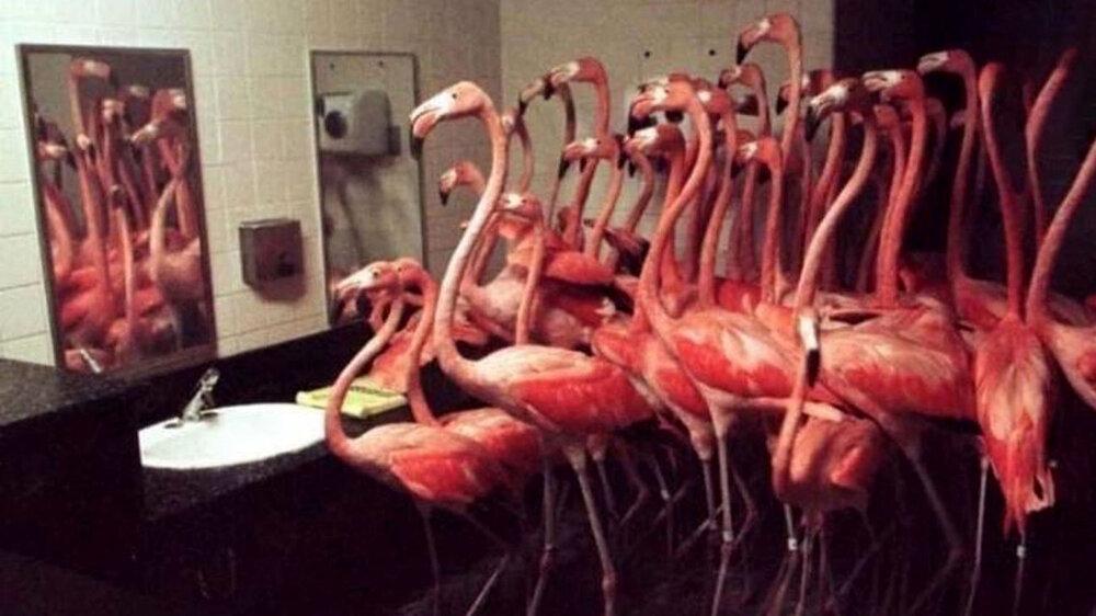 حبس ۳۰ پرنده در دستشویی از ترس طوفان / عکس