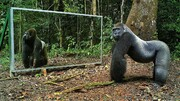واکنش جالب حیوانات جنگل در مقابل آینه / فیلم