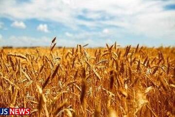 اعلام قیمت جدید گندم برای ۱۴۰۰