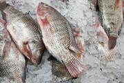 ویدئو حیرت انگیز از زنده شدن ماهی منجمد