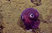 کشف حیوانی عجیب با چشمان لق /فیلم