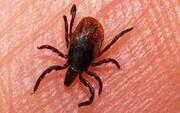 هشدار نسب به شیوع یک بیماری خطرناک با گرم شدن هوا
