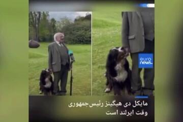 شیطنت سگ هنگام گفتگو رییسجمهور ایرلند در یک برنامه تلویزیونی / فیلم