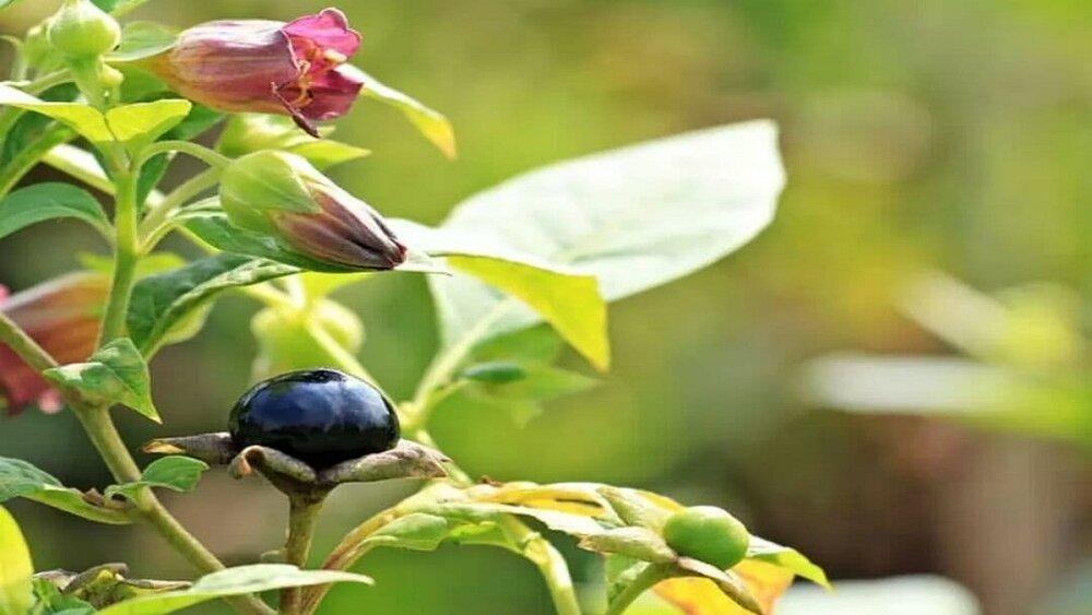 ۱۰ گیاه کشنده عجیب در جهان
