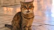 گربه پولداری که عاشق آب بازی است / فیلم