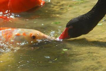 مهر مادری قوی سیاه برای ماهیها / فیلم