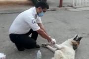 سگ مصدوم با پای خودش به اورژانس جادهای پناه برد / فیلم