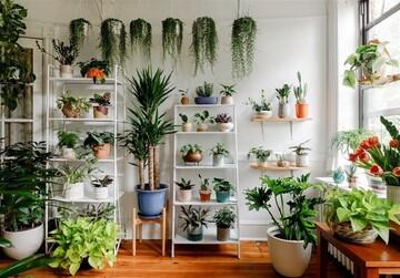 گیاهانی که نگهداری از آنها در خانه آسان است