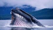 همه چیز درباره آواز خواندن نهنگها در زیر آب