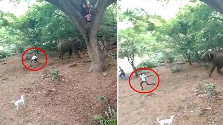 ویدیویی تلخ از اذیت و آزار فیلها توسط چند جوان شرور / فیلم