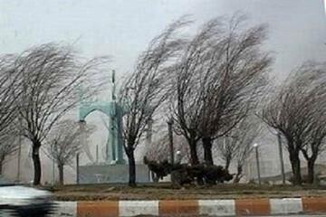 نجات معجزه آسا مرد یزدی از مرگ | لحظه افتادن درخت بر اثر باد شدید / فیلم