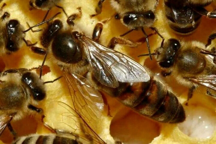 حمله وحشتناک زنبورها به خودرو یک زن / فیلم